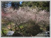 2013寒假山見花好旅遊網誌照片:IMG_0233.jpg
