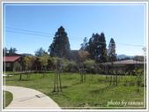 2013寒假山見花好旅遊網誌照片:IMG_0276.jpg