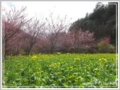 2013寒假山見花好旅遊網誌照片:IMG_0038.jpg