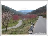 2013寒假山見花好旅遊網誌照片:IMG_0068.jpg