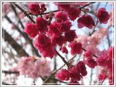 2013寒假山見花好旅遊網誌照片:IMG_0120.jpg