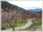 2013寒假山見花好旅遊網誌照片:IMG_0052.jpg