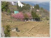 2013寒假山見花好旅遊網誌照片:IMG_0386.jpg