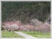 2013寒假山見花好旅遊網誌照片:IMG_0057.jpg