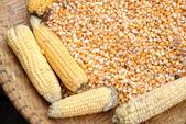 民以 食 為天:玉米.JPG