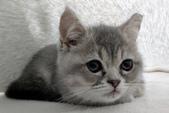 寵物寫真:IMAG0019~2.jpg