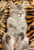 寵物寫真:IMAG0085.jpg