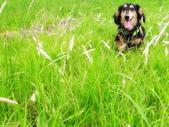 寵物寫真:DSCF6037.JPG