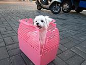 2010-09-21阿寶王宮吃鮮蚵(canon  S90照):阿寶也來囉