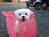 2010-09-21阿寶王宮吃鮮蚵(canon  S90照):放我出來  放我出來