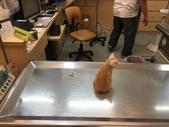 貓咪祕魯:檔案_001.jpeg