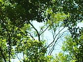 Peace of Nature:2009.09.05@苗栗三義慈濟茶園