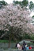 天元宮賞櫻半日遊:真想坐在櫻花樹下野餐啊!