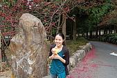 九族賞櫻去~:DSC_0434.JPG