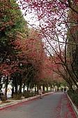 九族賞櫻去~:DSC_0394.JPG