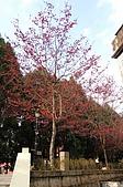 九族賞櫻去~:DSC_0395.JPG