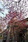 九族賞櫻去~:DSC_0404.JPG
