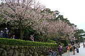 天元宮賞櫻半日遊:天元宮周圍種了一整圈櫻花