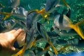 帛琉:數不盡的魚2