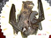 帛琉:蝙蝠湯~~~噁~~
