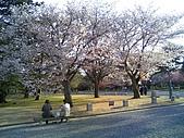 2008日本京都大阪賞櫻自由行~第1天:簡單的幸福...