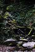 拉拉山:DPP_0008.JPG