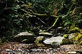 拉拉山:DPP_0009.JPG