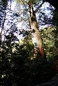 拉拉山:DPP_0016.JPG