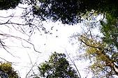 拉拉山:DPP_0018.JPG
