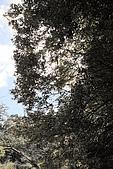 拉拉山:DPP_0005.JPG