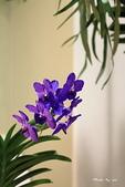 蘭花:IMG_5463.jpg