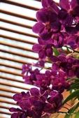 蘭花:IMG_1558.jpg