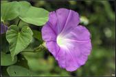 紫色:_MG_2728.jpg