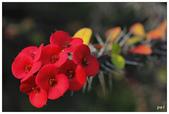 紅色:_MG_5613.jpg