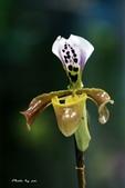 蘭花:IMG_8309.jpg