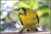 鳥集*:_MG_1251.jpg