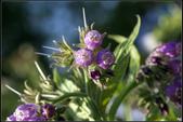 紫色:_MG_0598.jpg
