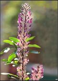 紫色:IMG_9971.jpg