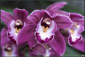 紫色:_MG_0810.jpg