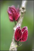紅色:_MG_1375.jpg