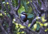 鳥集*:_MG_1435.jpg