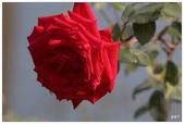 紅色:IMG_0157.jpg
