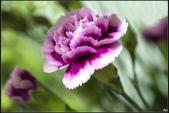 紫色:_MG_3209.jpg