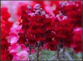 紅色:_MG_6637_1.JPG