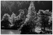 黑白--台灣之美:_MG_7130-1.jpg