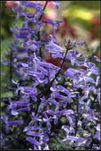 紫色:_MG_2212.jpg
