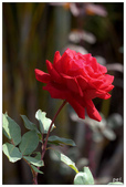 紅色:IMG_0158.jpg