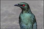 鳥集*:_MG_1213.jpg