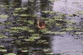 關渡自然公園:_MG_4489-1.jpg