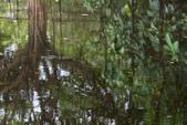關渡自然公園:_99K0003-1.jpg